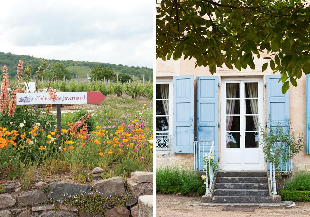 French wine_Beaujolais _4