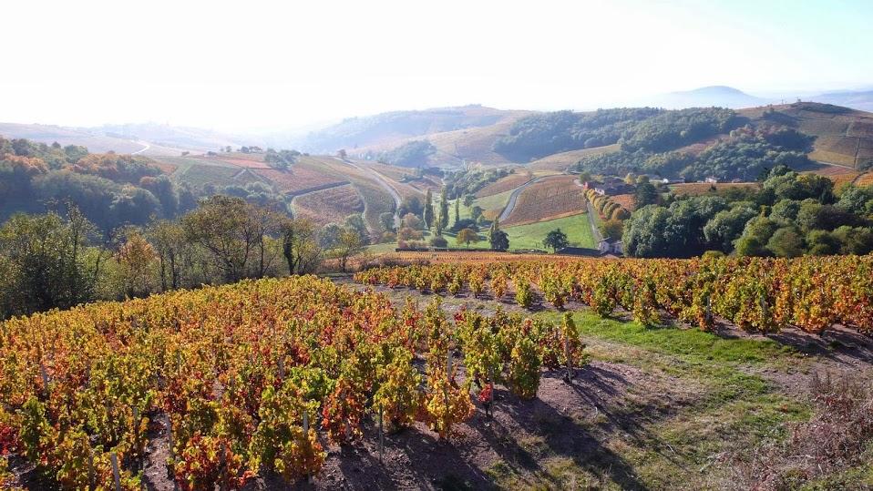French wine_Beaujolais _9