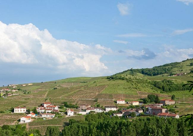 Виноделие во Франции: регион Божоле