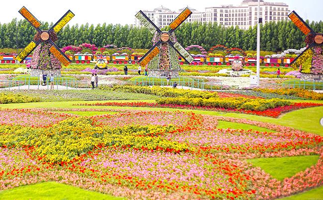 miracle-garden-park-tsvetov-v-dubai-8